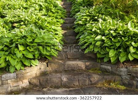 green and white hosta leaves around stone garden stairway - stock photo