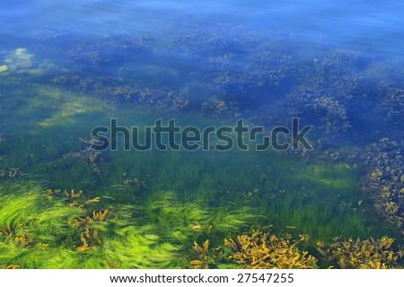 Green and yellow algae in the ocean floor - stock photo