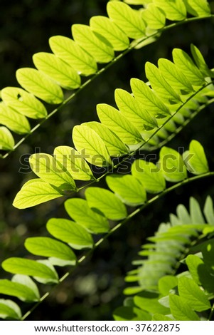 Green and yellow leaves on the black  background. - stock photo