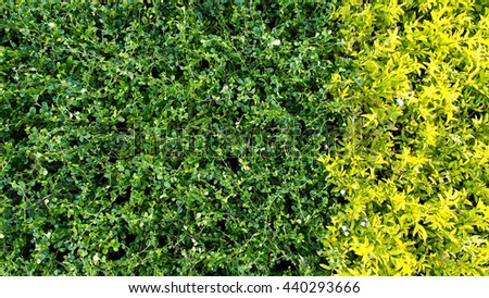 Green and Yellow Plants