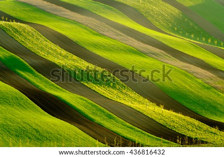 Green and yellow wavy hills in South Moravia, Czech Republic - stock photo