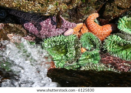 green anemone and starfishes - stock photo