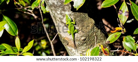 Green Anole II - stock photo