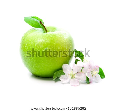 green apple fruit with spring pink flowers on branch