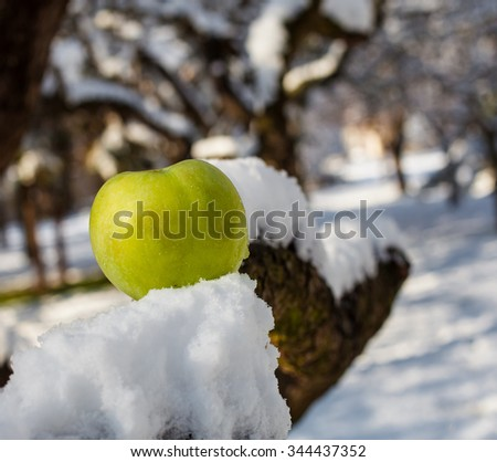 Green apple in the snow - stock photo