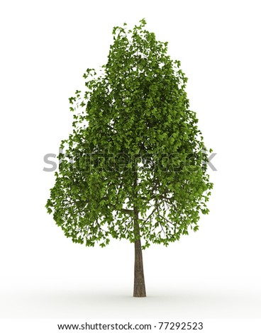 Green Apple tree isolated over white
