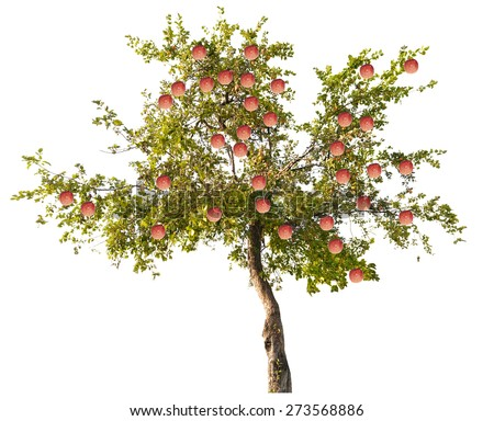 green apple-tree with small fruits isolated on white background - stock photo