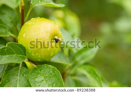 Green apple with water droplets - stock photo