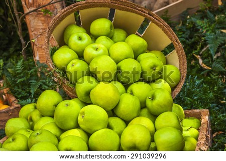 Green apples ina bushel surrounded by fresh greens. - stock photo