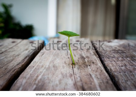 Green Asiatic Penny wort (Cent ella Asiatic ) on wooden background art
