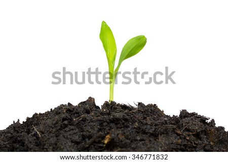 green baby plant isolated - stock photo