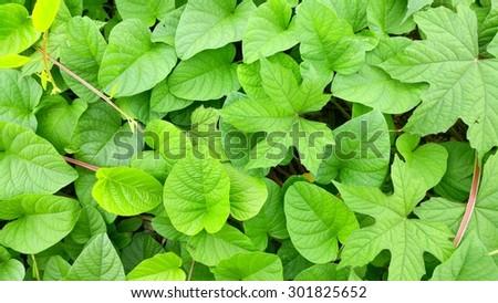 green background - stock photo