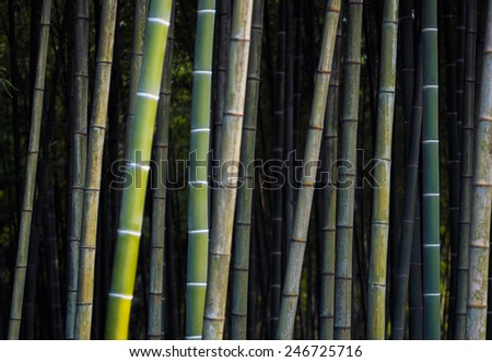 Green background with bamboo. Bamboo jungle - tropical forest texture. Asian design for zen culture tradition. - stock photo