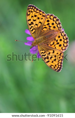 green background with big butterfly