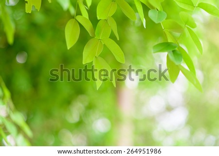 Green background with bokeh