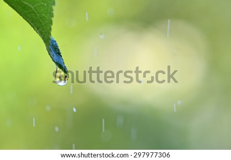 Green background with drop of rain on leaf. - stock photo