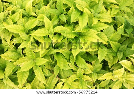 Green Backgrounds in Thailand - stock photo