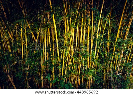 Green bamboo forest Thailand - stock photo