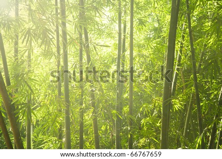 green bamboo forest with ray of lights - stock photo