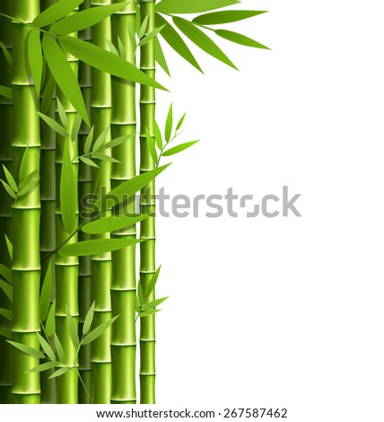 Green bamboo grove isolated on white background