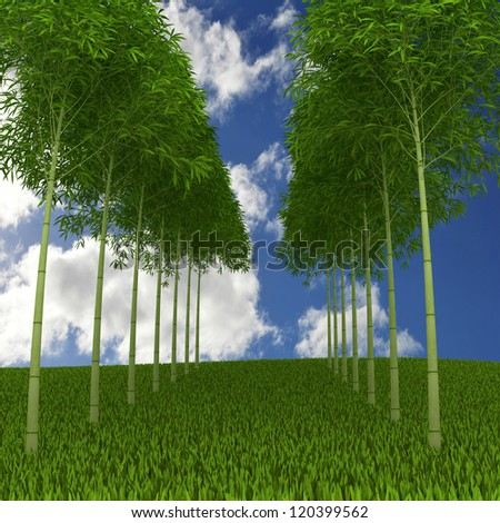 Green bamboo  in meadow with blue sky