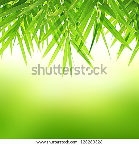 Green Bamboo leaf abstract background - stock photo