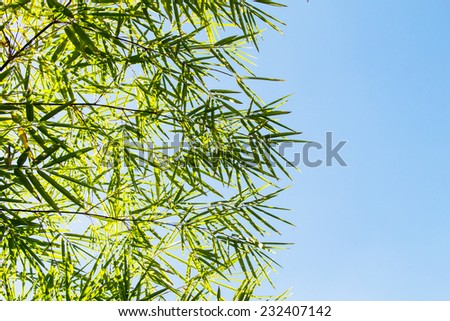 Green bamboo leaves against a blue sky background - stock photo