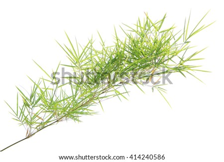 Green bamboo leaves background - stock photo