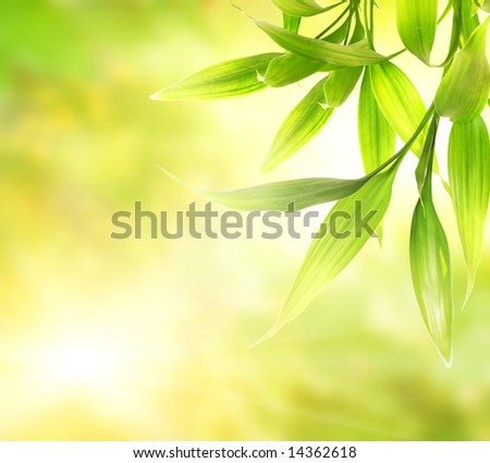 Green bamboo leaves over abstract blurred background - stock photo