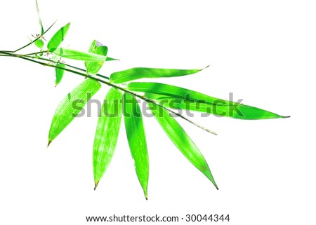 green bamboo shoots in isolation