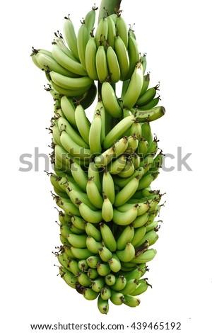 Green banana isolated on white background - stock photo