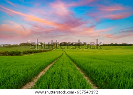 Green barley field at sunset