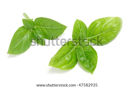 Green basil isolated on white - stock photo