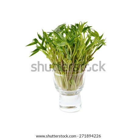 green bean sprouts in glass on white background - stock photo