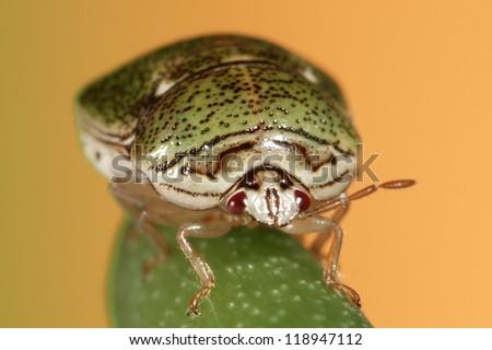 Green Beetle - stock photo