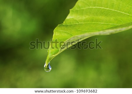 Green big leaf with water-drop. - stock photo