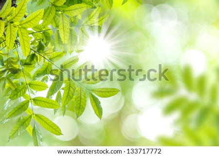 Green bokeh abtract light background