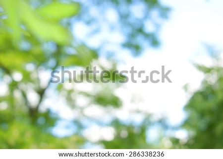 green bokeh foliage. natural background - stock photo