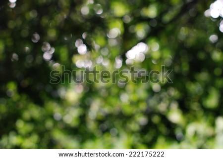 green bokeh from tree.  - stock photo