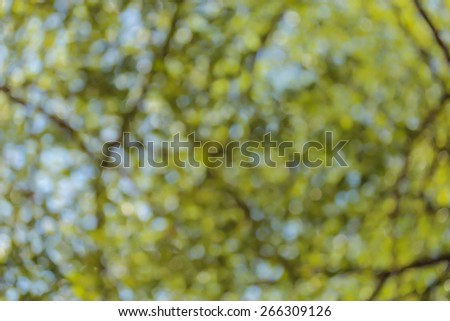 green bokeh from tree