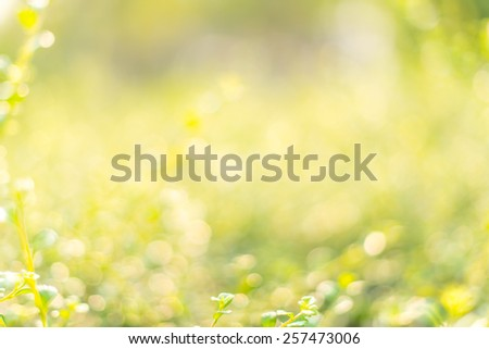 Green bokeh from tree, green background - stock photo