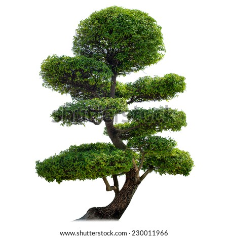 Green bonsai tree isolated on white background. Japanese culture symbol  - stock photo