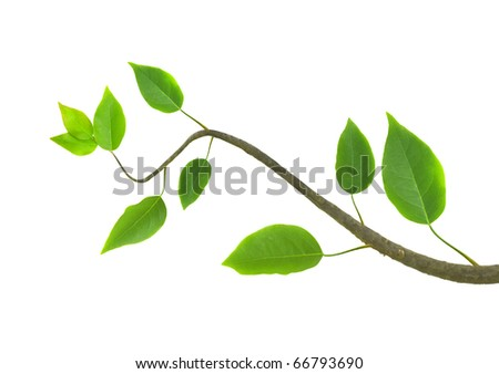 Green  branch - stock photo