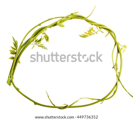 green branch isolated on a white background - stock photo