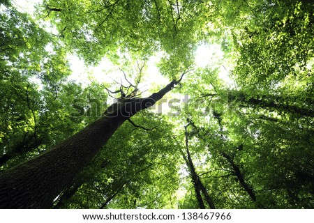 Green branches in a wood - stock photo