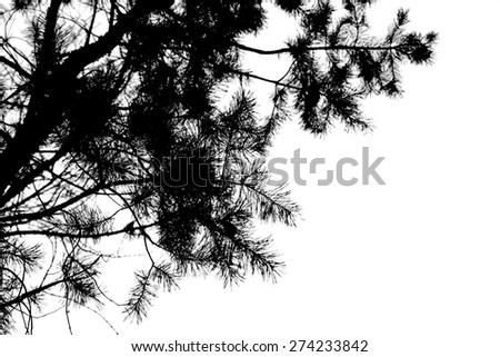 green branches of spruce