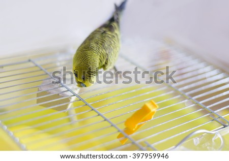 Green Budgerigar sitting on cage - stock photo