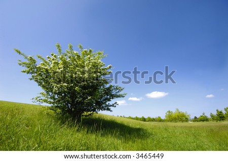 Green bush on a green field - stock photo