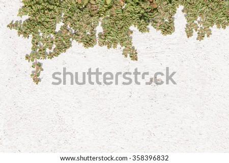 Green bush on white wall. background - stock photo