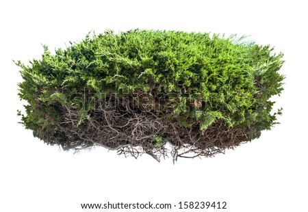 Green bush with roots isolated on white background - stock photo